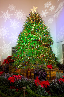United States Botanic Garden's Christmas Tree